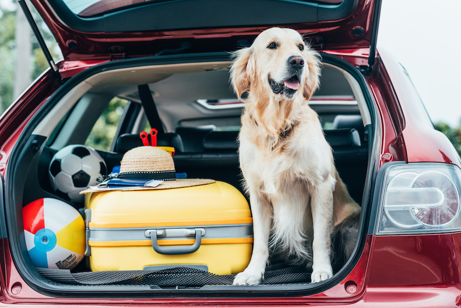 Keeping Your Old Dog Young with Travel and New Experiences